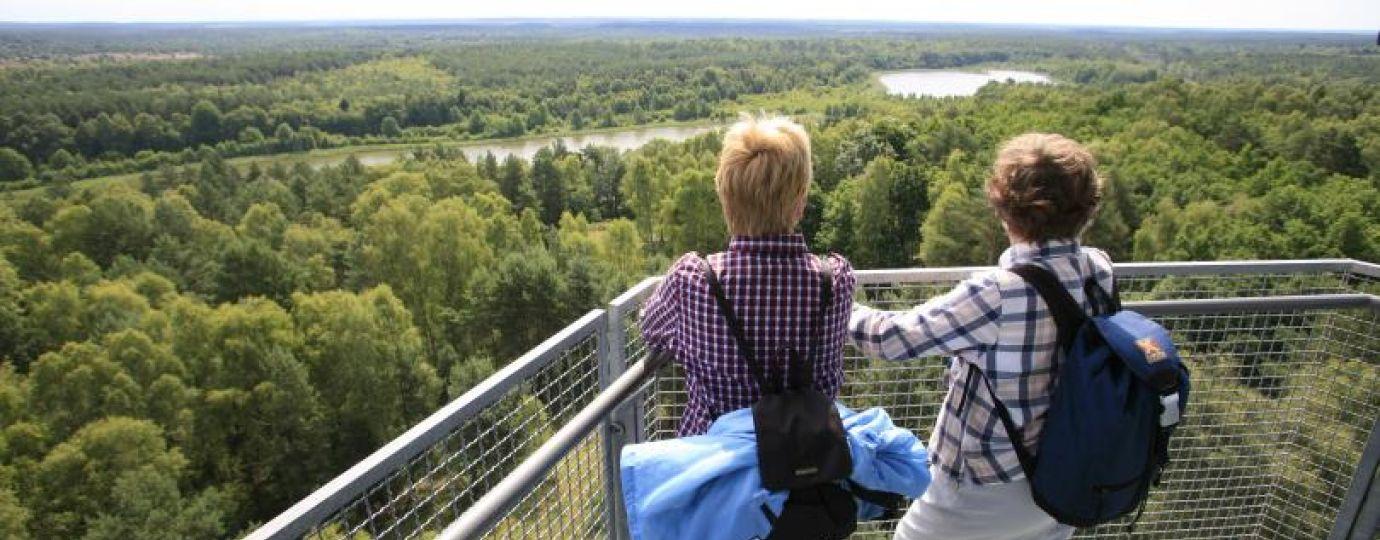 Ausblick vom Käflingsbergturm im Müritz-Nationalpark