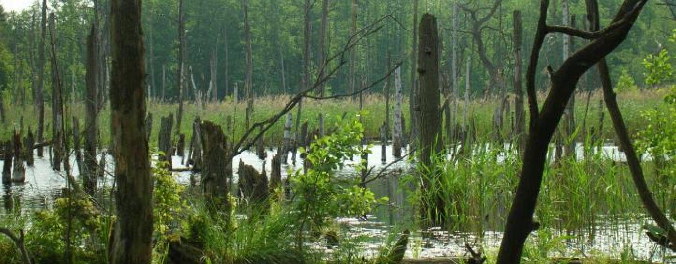 Der renaturierte Mühlensee im Müritz-Nationalpark